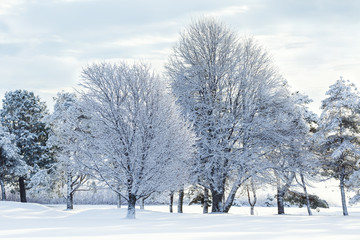 Trees in the winter landscape