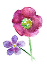 Beautiful watercolor flower .with stem and petals