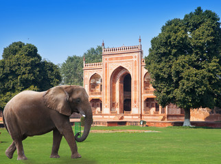 elephant on a grass before Gate to Itmad-Ud-Daulah's Tomb (Baby Taj) (17th century)at Agra, Uttar Pradesh, India