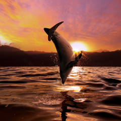 seascape beautiful playful dolphin jumped from ocean at the sunset time