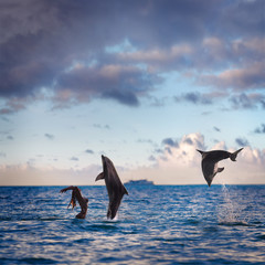 oceanview seaview with nice sea surface. Two playful dolphins play with girl on water under cloudscape at sunset time