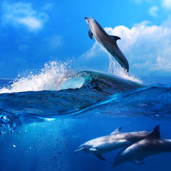 dolphin leaping from breaking surfing wave and his family underw