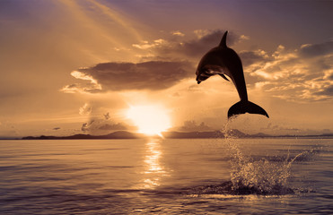 Wall Mural - beautiful dolphin jumped at the sunset time