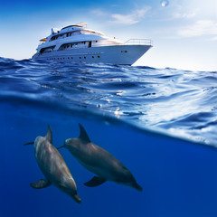 Fototapete - Underwater splitted by waterline template. Two bottlenose dolphins swimming under boat