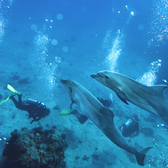 two playful dolphins swimming underwater above group of divers