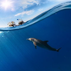tropical seascape with water waved surface and dolphin swimming underwater