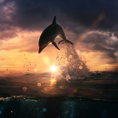 beautiful dolphin jumped from the ocean at the sunset time