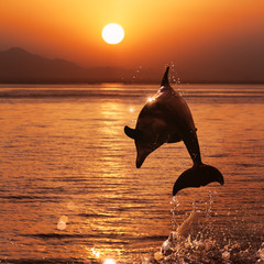 Wall Mural - beautiful dolphin jumped from watrer at the sunset time