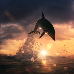 Wall Mural - beautiful dolphin jumped from the ocean at the sunset time