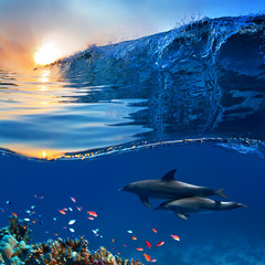 two beautiful dolphins swimming underwater through coral reef full of life with nice breaking wave