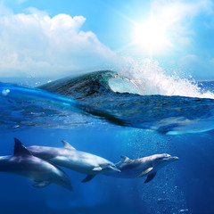 beautiful dolphins playing under ocean breaking surfing wave