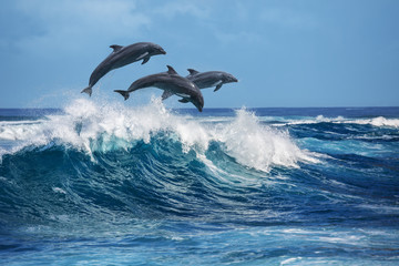 Keuken foto achterwand Dolfijn Playful dolphins jumping over breaking waves. Hawaii Pacific Ocean wildlife scenery. Marine animals in natural habitat.