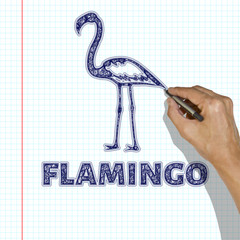 Flamingo are drawn with a pen. The hand draws a Flamingo in a school notebook