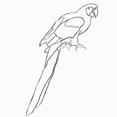 coloring of Caribbean parrot sitting. illustration