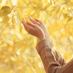 Autumn photo sensual female hands gently touching yellow leaves