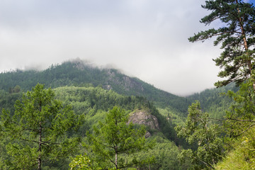 Clouds in the mountains covered with the green wood.