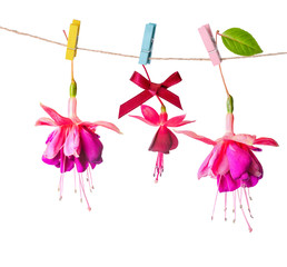 beautiful colorful fuchsia flowers handing on rope with clothesp