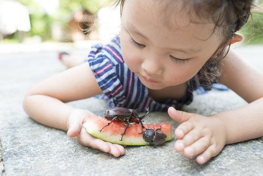 カブトムシを観察する女の子