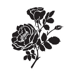Silhouette rose branch with opened flowers and buds