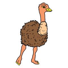 ostrich Bird Poultry beast icon cartoon design illustration animal