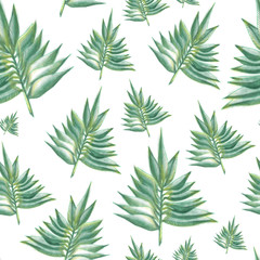 Leaves green fern pattern on the white background