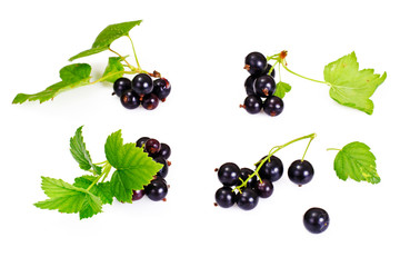 Fresh Juicy Blackcurrant