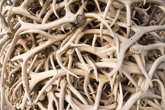Ivory Pile Elk Antlers Animal Horns Art Installation