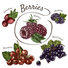 Vector illustration colorful set with berries.