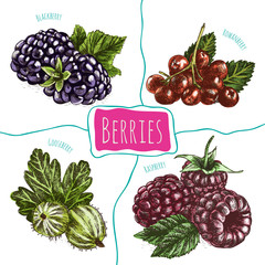 Vector illustration colorful set with berries