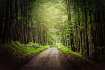 Photo Stands Road in forest fantasy forest path