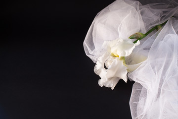 white flower with a veil on a black background