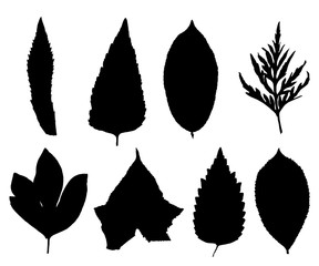 Collection of silhouettes leaves