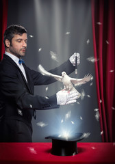 Wall Mural - magic trick with pigeon