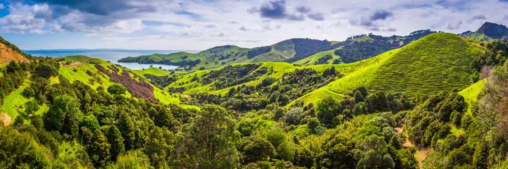 Landscape at Coromandel, New Zealand