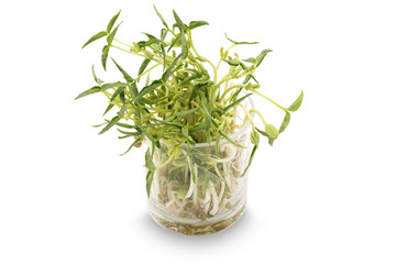 Been sprouts in little glass pot on white background