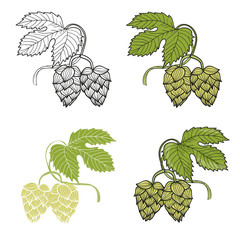 Vector illustration of hop branches isolated on white. Sketch design.