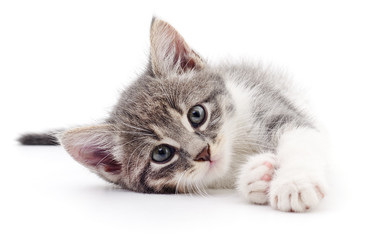 Kotek na białym tle.