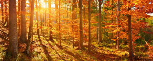 Papiers peints Forets Autumn forest