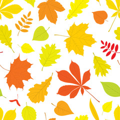 Autumn seamless pattern of different, isolated tree leaves - oak, chestnut, birch, Rowan, linden, jasmine, lilac, maple, willow, poplar, sycamore. Vector illustration in colour on white background.