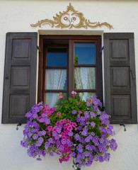 Fenster an Bauernhaus mit Petunien üppig dekoriert