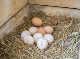 Куриные яйца в гнезде в курятнике