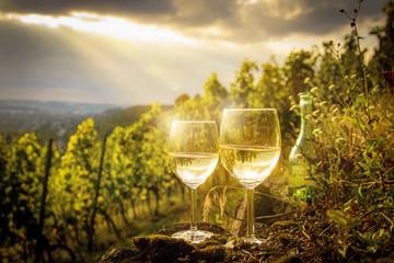 Weißweingläser im Weinberg bei Sonnenuntergang