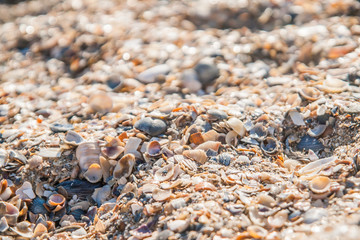Background of colored sea shells