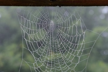 spiderweb photographed close-up