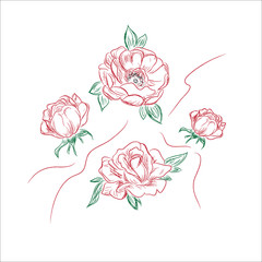 flowers in sketch style, peony, vector illustration