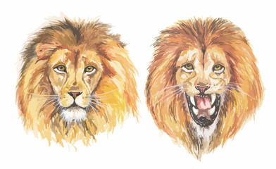 Watercolor lion set. Calm and roaaring lions on white background. Colorful art.