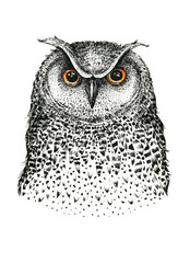 Hand drawn black white illustration owl fly bird. Art Coloring