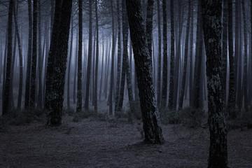 Fototapeten Wald Dark foggy forest