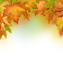 Fall background with red, orange, yellow, brown and green autumn leaves