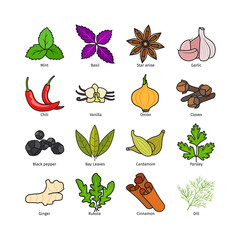 Herbs and spices vector. Hand drawn condiments isolated on white background